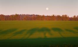 Abendlandschaft mit Schatten der Allee Stockfotografie