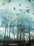 Abendlandschaftsbäume Lizenzfreie Stockbilder