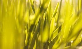 Abendlandschaftssonnenuntergang in der Wiese, auf dem Gras und der gelben Anlage Weicher vorgewählter Fokus Lizenzfreie Stockbilder