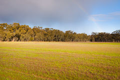 Abendlicht über Feld mit Eukalypten und Regenbogen Stockbilder