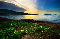 Abendmeer und -gras auf dem Strand mit Sonnenuntergang lizenzfreie stockbilder