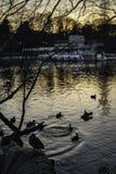 Abendpark Lizenzfreies Stockbild