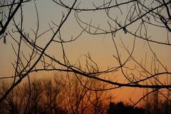 Abendrot und Zweige voll des Zens stockfotos