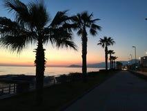 Abendruhiger see und -palmen Stockfoto