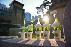 Abendsonnenlicht, das auf den Blumen benutzt für das Beten an Jogyesa-Tempel in Seoul glänzt Stockbilder