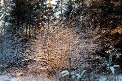 Abendwald Lizenzfreie Stockfotografie