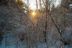 Abendwald Stockfoto