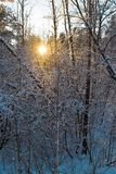 Abendwald Lizenzfreies Stockfoto