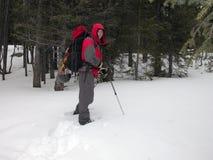 Abenteuer in der Wildnis Lizenzfreies Stockbild