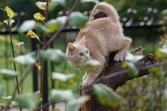 Abenteuerliche Katze unter dem Grün Lizenzfreie Stockfotografie