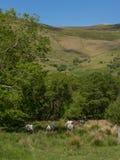 Aber falls - wild ponies Royalty Free Stock Photos