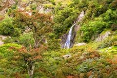 Aber nedgångar i den Showdonia nationalparken Royaltyfri Bild