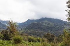 Aberdare绿浪  肯尼亚,非洲 免版税库存图片