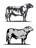 Aberdeen angus royalty illustrazione gratis