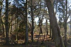 Aberdeenshire skogsmark Royaltyfri Fotografi