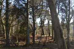 Aberdeenshire Woodland Royalty Free Stock Photography