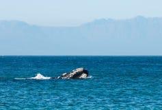 Abertura de la ballena Imagen de archivo