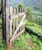 Abertura de madeira da porta na exploração agrícola do chá Imagem de Stock Royalty Free