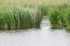 Abertura em uma fileira de lingüeta em um lago Fotos de Stock Royalty Free