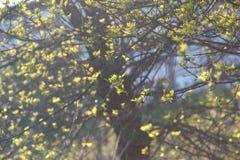 A abertura nova sae em uma árvore na mola Fotografia de Stock Royalty Free