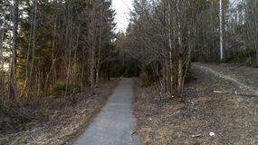 Abetaia all'inizio della molla Foresta dopo il paesaggio di inverno immagini stock
