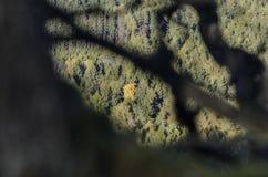 Abetaia con l'albero variopinto Immagine Stock