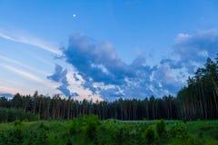 Abetaia e cielo nuvoloso alla conclusione del giorno Immagini Stock