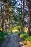 Abetaia, giorno di estate soleggiato del cielo blu Fotografie Stock Libere da Diritti