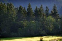 Abetaia in montagne della regione selvaggia con l'agricoltura del campo di grano Fotografia Stock Libera da Diritti