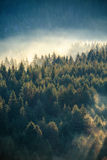 Abetaia nebbiosa sul pendio di montagna in una riserva naturale Fotografia Stock