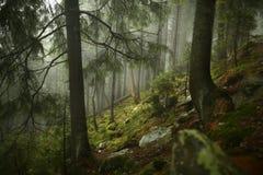 Abetaia nebbiosa sul pendio di montagna in una riserva naturale Fotografie Stock Libere da Diritti