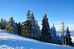 Abetaia sotto la neve sul paesaggio della montagna Immagine Stock