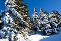 Abetaia sotto la neve sul paesaggio della montagna Fotografie Stock