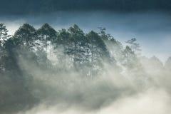 Abetaia sull'alta montagna Fotografia Stock Libera da Diritti