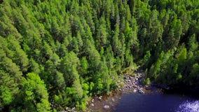 Abetaia sulle colline della Finlandia sulla riva del lago stock footage