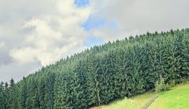 Abetaia verde sulla strada di Transalpina, montagne di Parang Immagini Stock