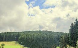 Abetaia verde sulla strada di Transalpina, montagne di Parang Fotografia Stock Libera da Diritti