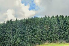 Abetaia verde sulla strada di Transalpina, montagne di Parang Immagine Stock Libera da Diritti