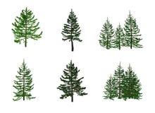 abete illustrazione vettoriale
