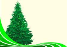 Abete dell'albero Immagine Stock