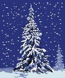 Abete di inverno Fotografia Stock