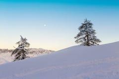 Abete due da solo nel paesaggio di inverno Fotografia Stock Libera da Diritti
