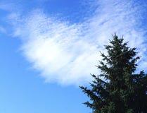Abete ed il cielo Immagini Stock Libere da Diritti