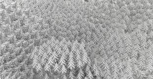 Abete Forest Background White Fotografia Stock
