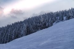 Abete innevato sul pendio della montagna Fotografia Stock Libera da Diritti