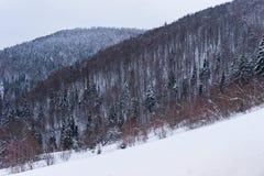 Abete innevato sul pendio della montagna Fotografia Stock