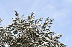 Abete rosso nella neve contro il cielo Immagini Stock Libere da Diritti