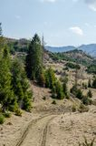 Abete rosso nelle montagne Fotografia Stock