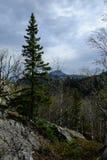 Abete rosso nelle montagne fotografie stock