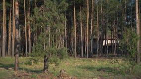 Abete rosso non trattato verde di Forest Pine Trees Fairy Forest Modello della foresta archivi video
